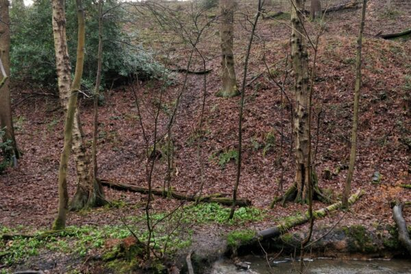 Northcliffe Woods, Shipleyphoto