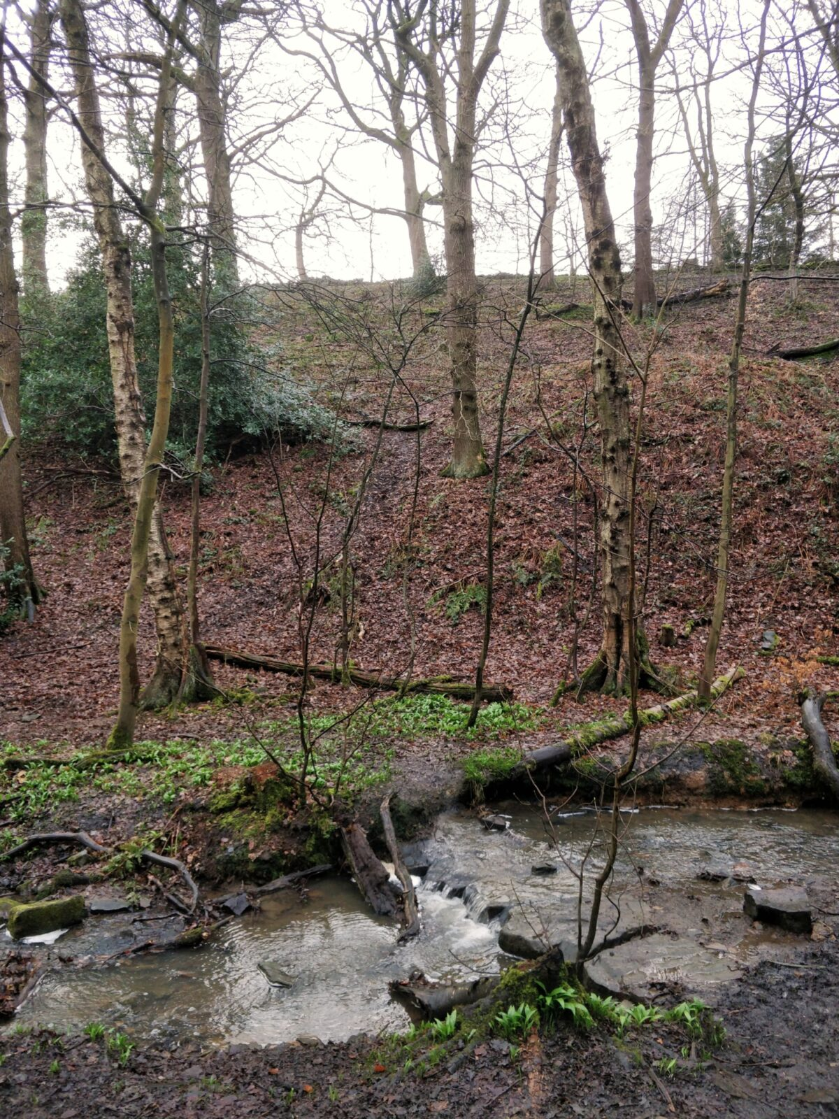 Northcliffe Woods, Shipley large photo 1