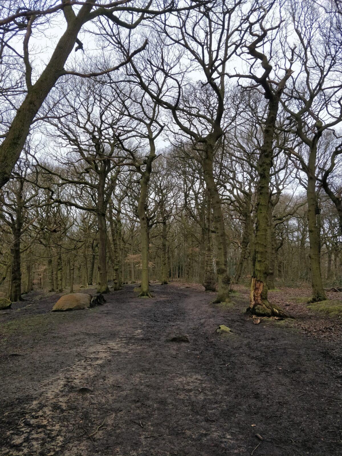 Northcliffe Woods, Shipley large photo 4