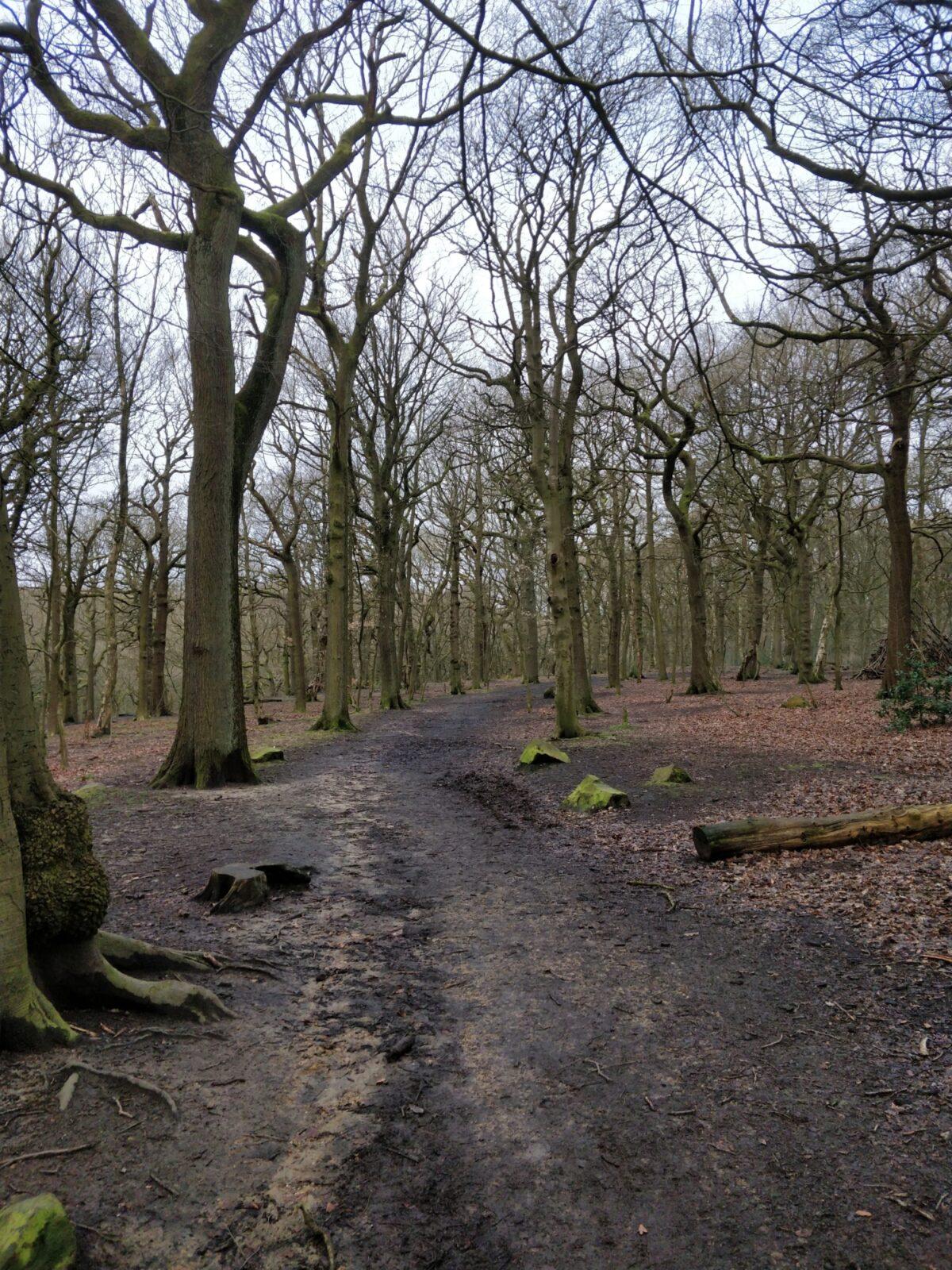Northcliffe Woods, Shipley large photo 5