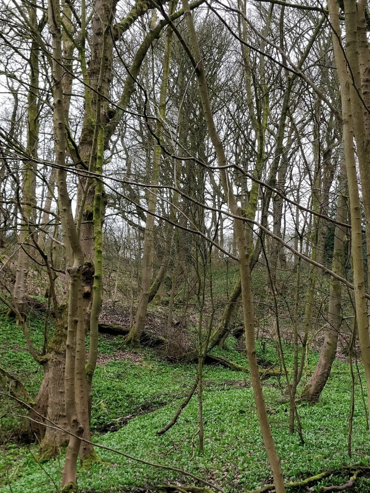Northcliffe Woods, Shipley large photo 6