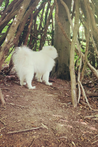 Dog walk at Nut Wood, Raywell photo