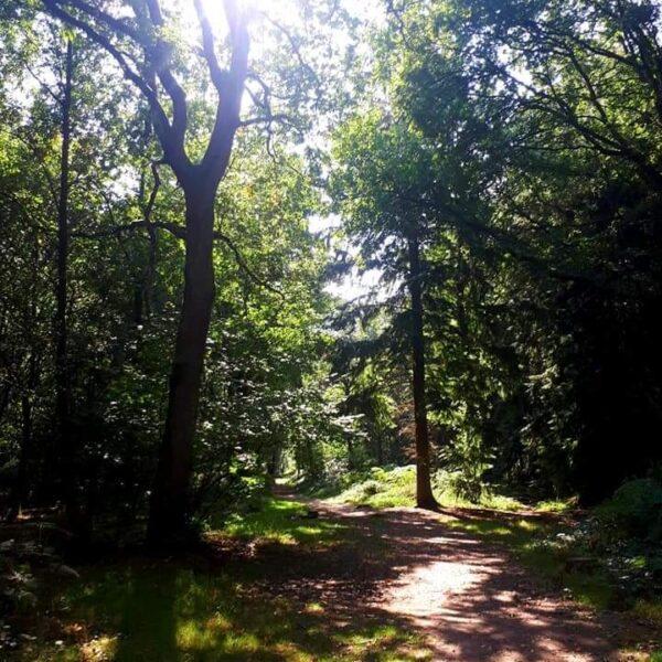Oakley Wood photo 2