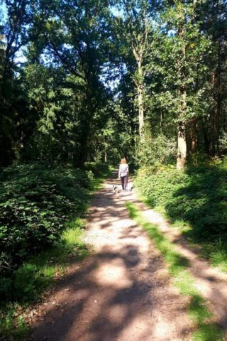 Dog walk at Oakley Wood photo