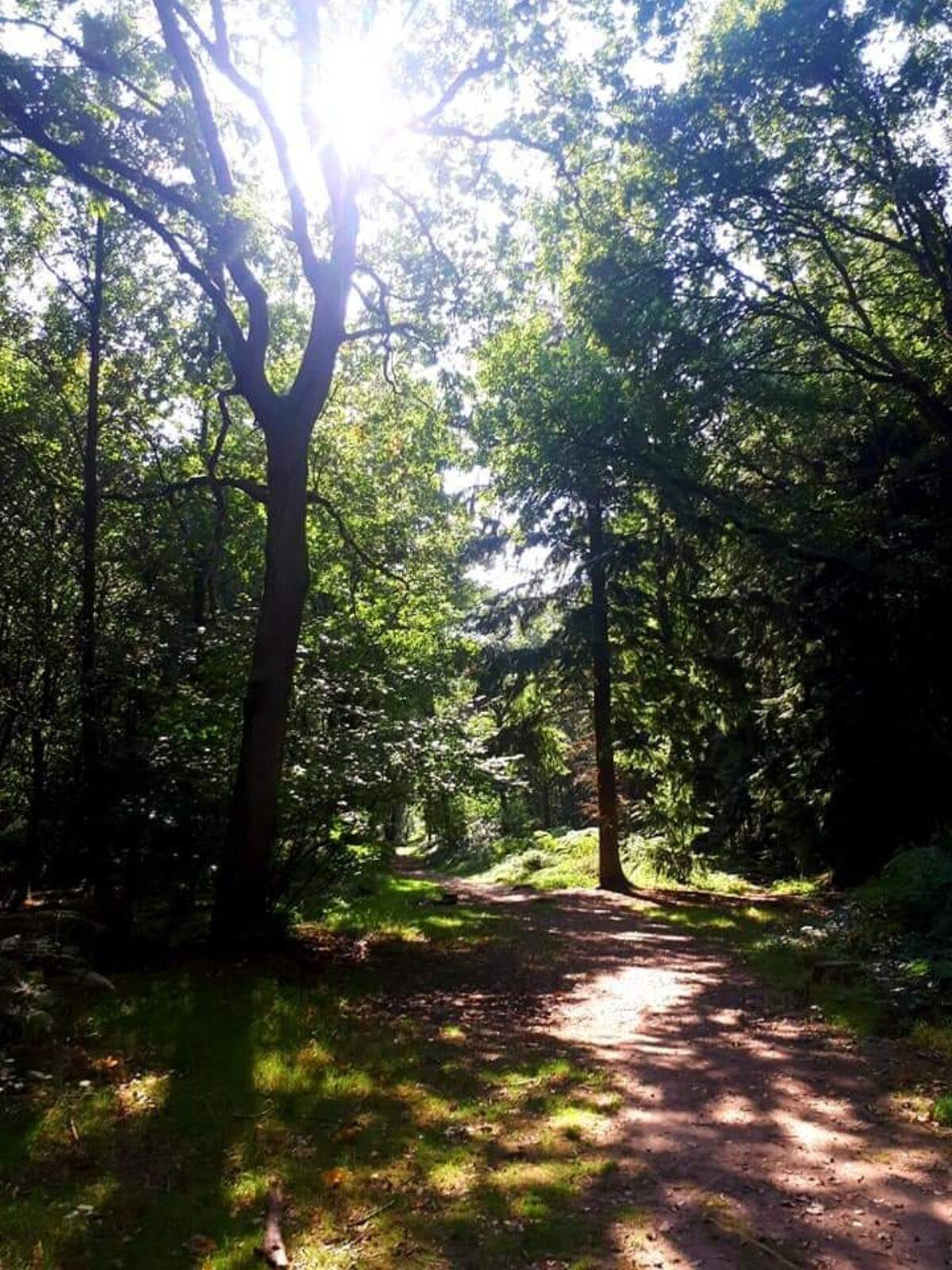 Oakley Wood large photo 2
