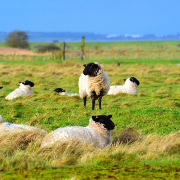 Oare Marshes photo 2