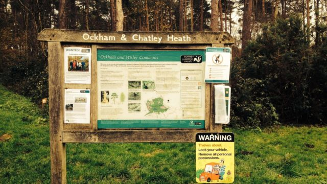 Dog walk at Ockham And Chatley Heath