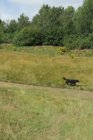 Dog walk at Old Eastleigh Golf Course photo