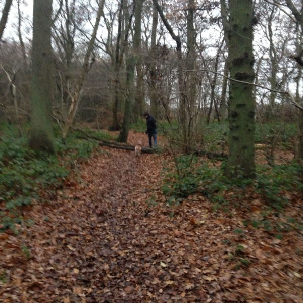 Old Knebworth Two Woods Walk photo 4