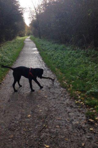 Dog walk at Old Train Line Walk, Brixworth photo