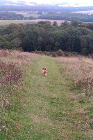 Dog walk at Old Winchester Hill photo