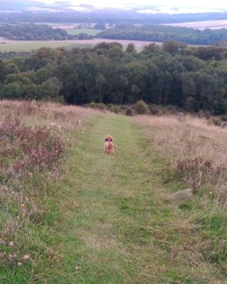 Dog walk at Old Winchester Hill