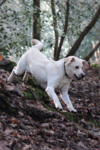Dog walk at Oldbury Court Estate photo