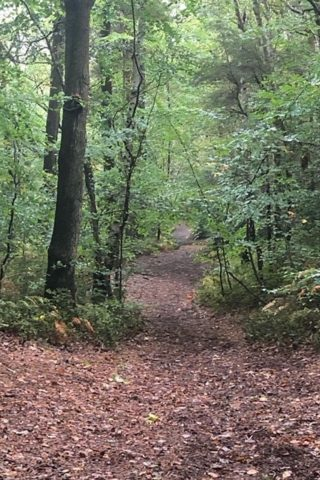 Dog walk at Oldbury Hill photo