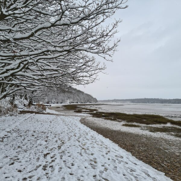Orwell Country Park photo 5