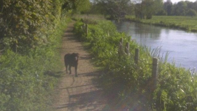 Dog walk at Otter Trail, Otterbourne