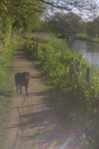 Dog walk at Otter Trail, Otterbourne photo