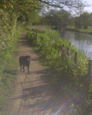 Dog walk at Otter Trail, Otterbourne