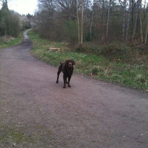 Dog walk at Oversley Woods, Alcester