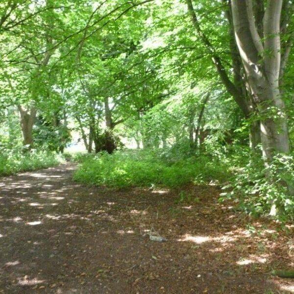 Dog walk at Owely Wood