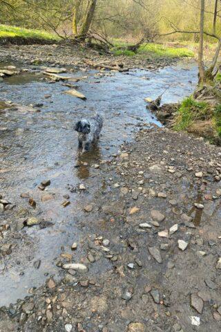 Dog walk at Park Bridge photo