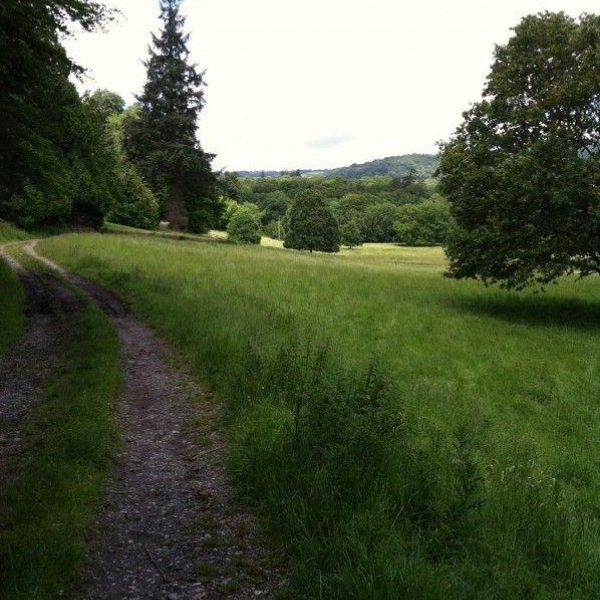 Dog walk at Parke, Bovey Tracey