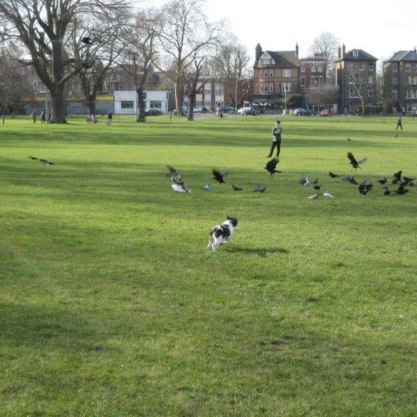 Dog walk at Peckham Rye Park And Common