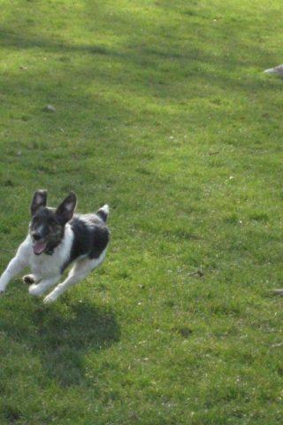 Dog walk at Peckham Rye Park And Common photo