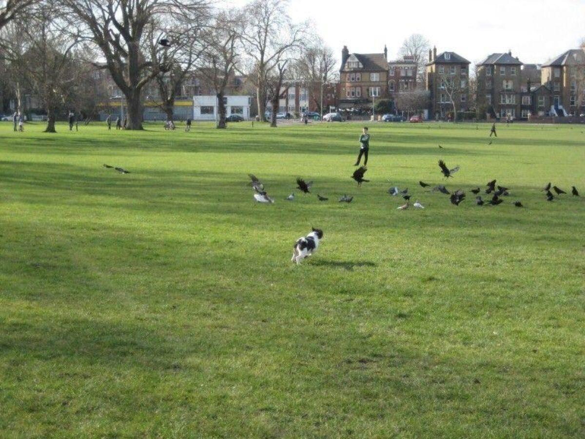 Peckham Rye Park And Common large photo 3