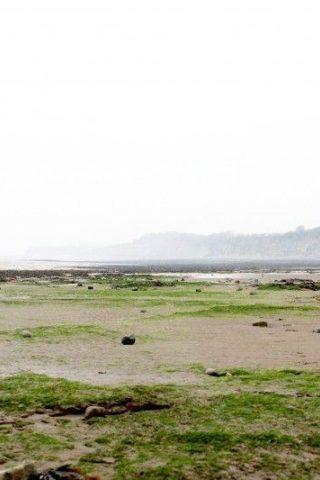Dog walk at Penarth Beach photo