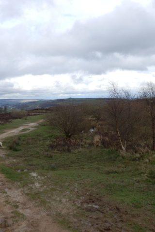 Dog walk at Penistone Hill, Haworth photo