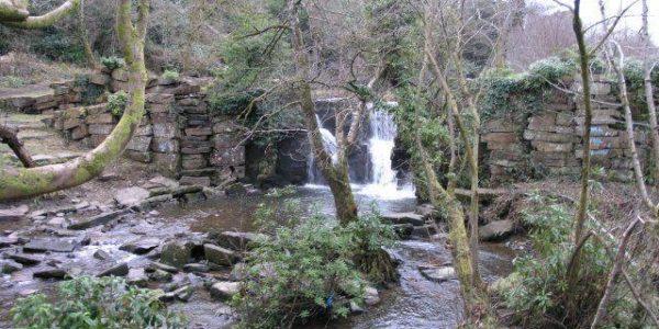 Clyne Gardens, Mayals, Swansea