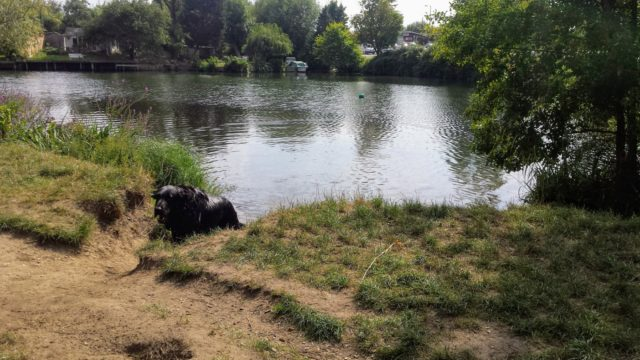 Dog walk at Penton Hook. Thames Path and Laleham Park