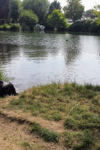 Dog walk at Penton Hook. Thames Path and Laleham Park photo