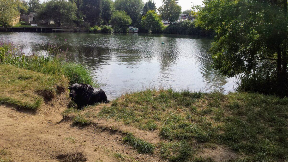 Penton Hook. Thames Path and Laleham Park large photo 1