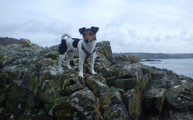 Perranuthnoe To Marazion Dog walk in Cornwall