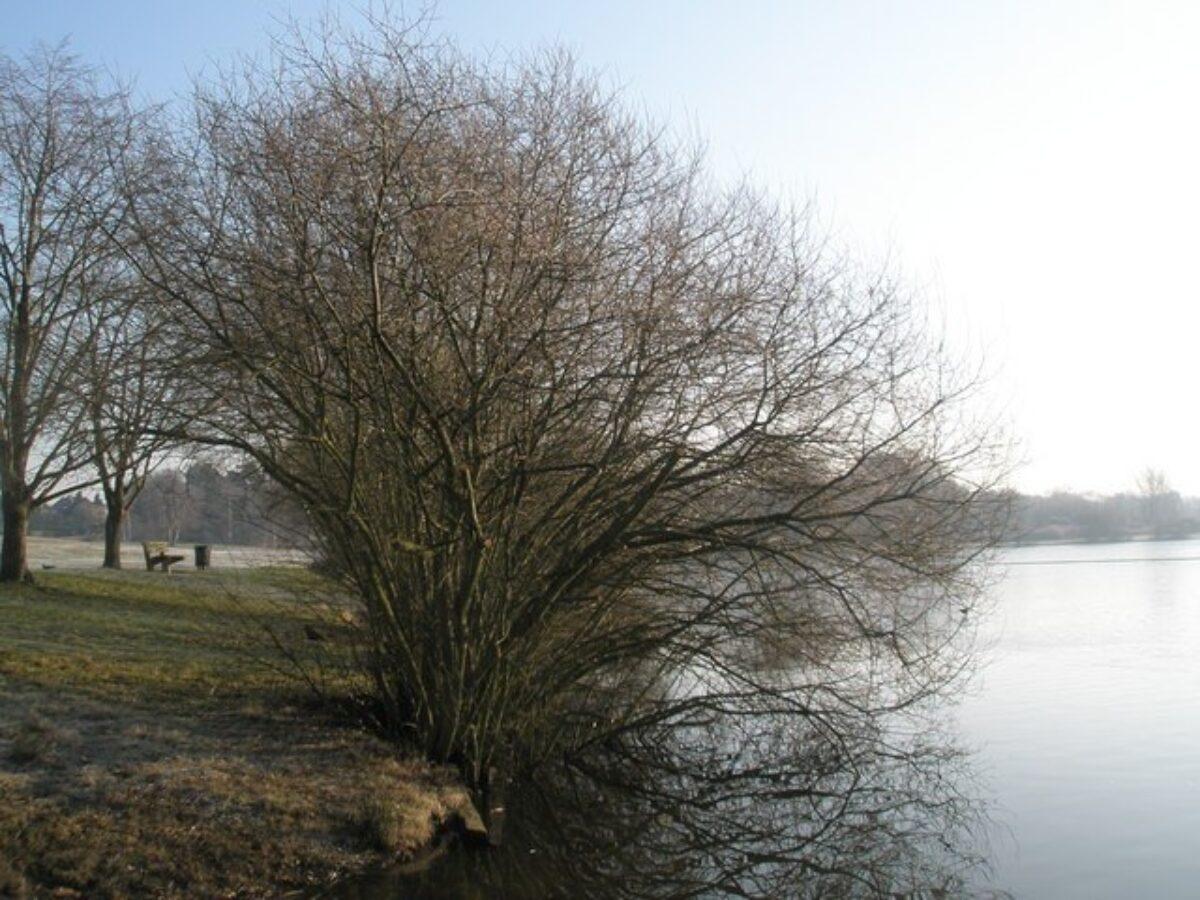 Petersfield Lake And Heath large photo 2