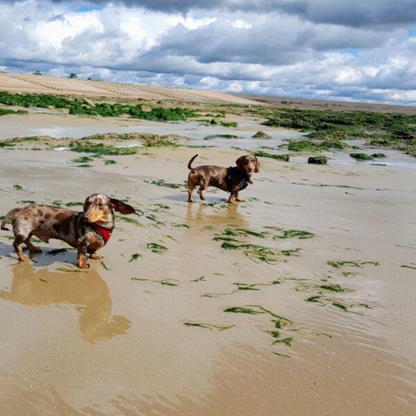 Dog walk at Pett Level Beach