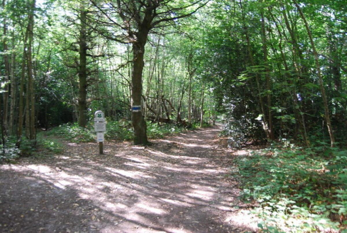 Petts Wood large photo 1