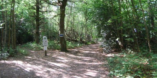 Petts Wood