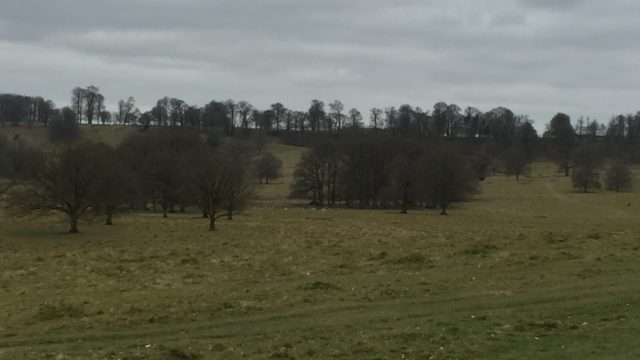 Dog walk at Petworth Park