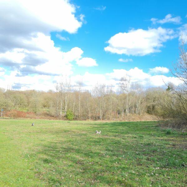 Phillips Park photo 5