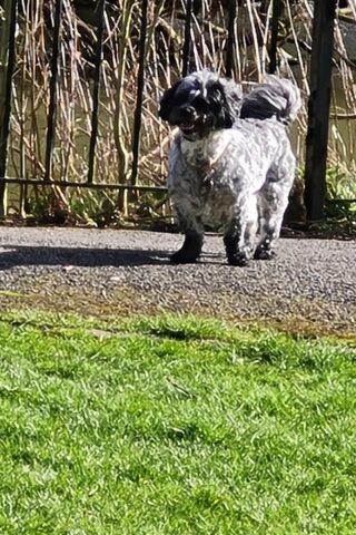 Dog walk at Phillips Park photo