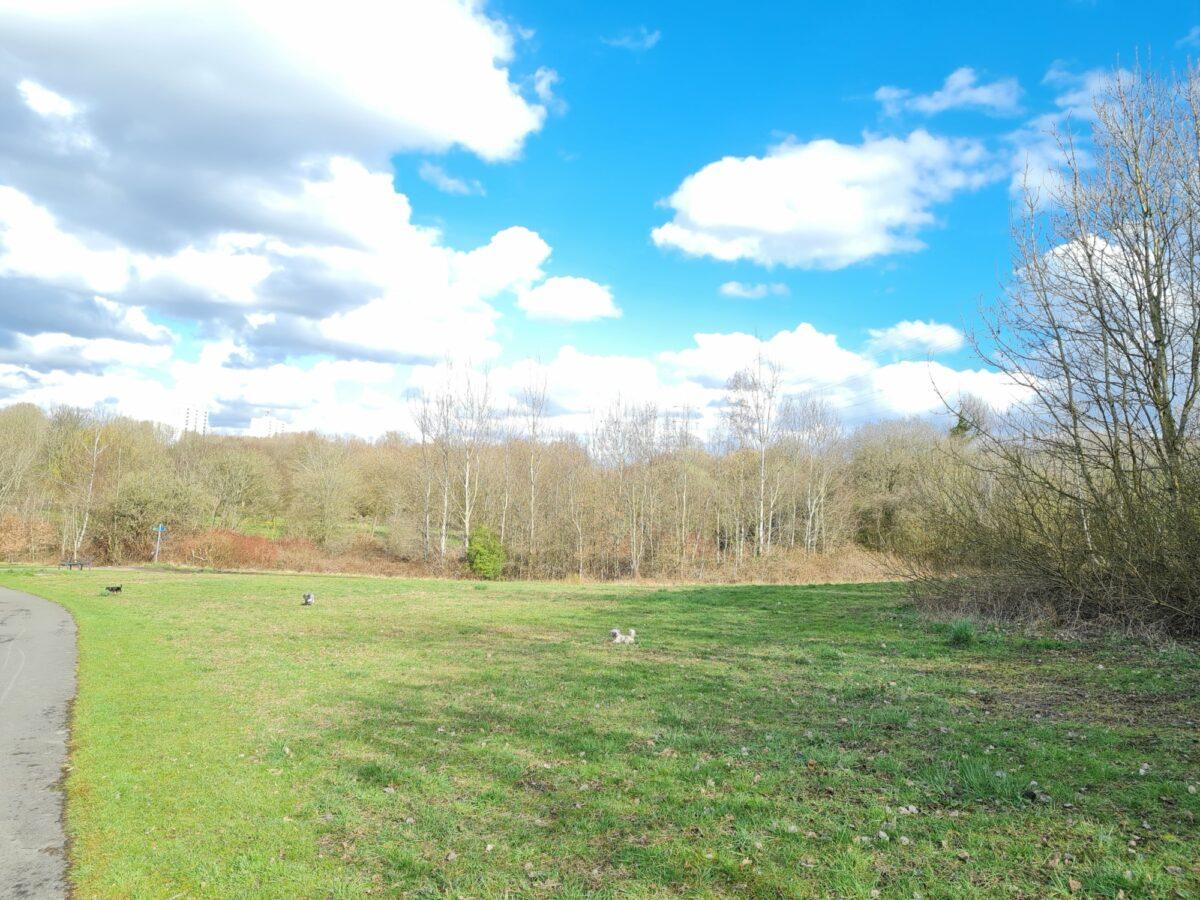 Phillips Park large photo 5