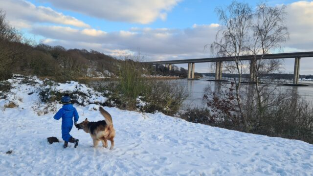 Dog walk at Pipers Vale