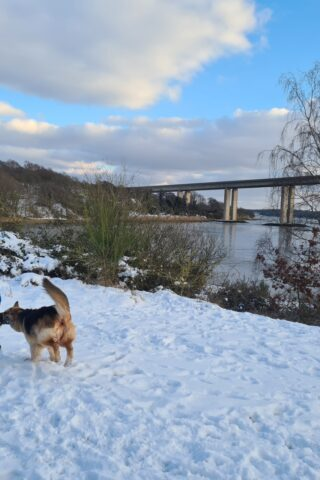 Dog walk at Pipers Vale photo