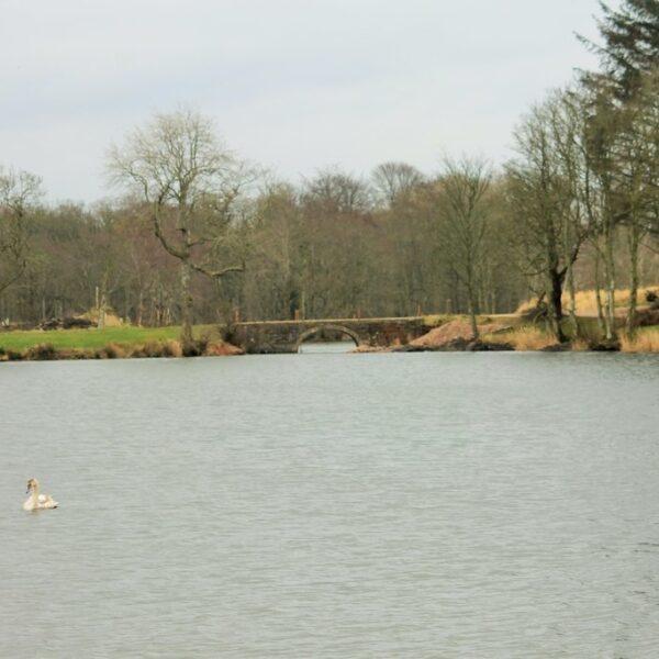 Dog walk at Pitfour Lake
