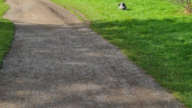 Dog walk at Platt Fields