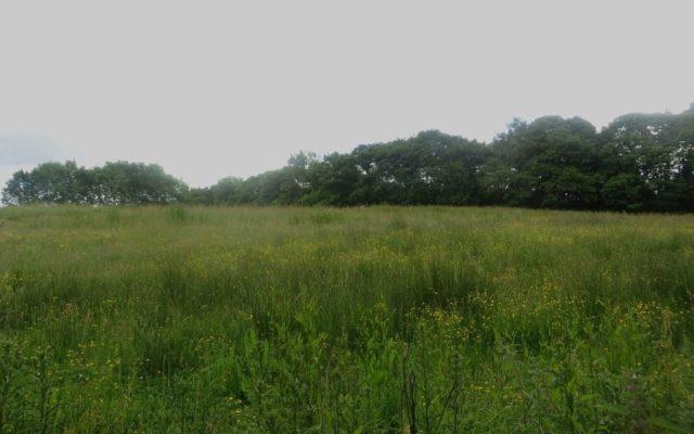 Plessey Woods Park Dog walk in Northumberland