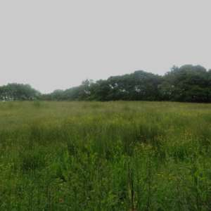 Plessey Woods Park